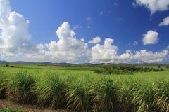 糖种植园在古巴 库存照片