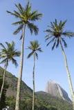糖面包山里约热内卢巴西 库存图片
