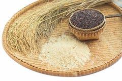 糙米和水稻在竹子 免版税库存照片