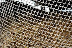 系住在堆模糊的背景的滤网干草 纹理背景 库存照片