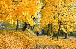 系列在秋天槭树公园 免版税库存图片