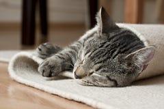 系列小猫 库存照片
