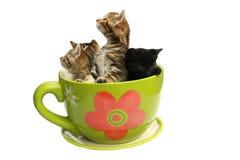 系列小猫 库存图片