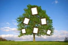 系族树 库存图片