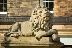 索尔泰尔狮子-警惕性 免版税库存照片