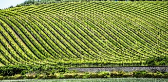 索诺马和纳帕谷vinyards在加利福尼亚 免版税库存图片