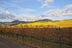 索诺马在秋天期间的葡萄园风景 免版税库存图片