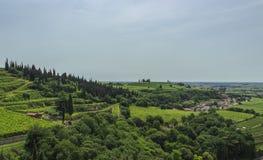 索阿韦地区意大利的葡萄园 库存图片