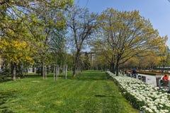 索非亚,保加利亚- 2018年4月14日:花在全国劳动人民文化宫前面的公园在索非亚 库存图片