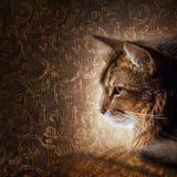 索马里猫的纵向 库存照片