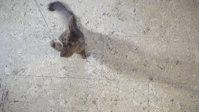 索马里跃迁小猫在照相机 影视素材