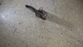 索马里跃迁小猫在照相机 股票录像