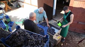 紧压汁液从葡萄 葡萄酒酿造 葡萄酒酿造 影视素材