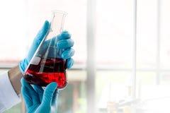 紧密,拿着检查红色液体的,实验室设备的概念的科学家锥形烧瓶在科学实验的 库存图片