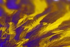 紫外抽象背景-鸟的羽毛特写镜头,绘在紫外颜色 库存图片
