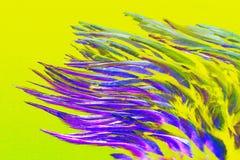 紫外抽象背景-鸟的羽毛特写镜头,绘在紫外颜色 免版税库存照片