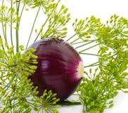 紫洋葱和dil 库存照片