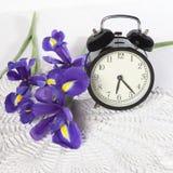 紫罗兰使xiphium球茎虹膜,与时钟的sibirica现虹彩在与空间的白色背景文本的 顶视图,平 假日gr 库存照片