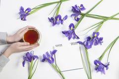 紫罗兰使xiphium球茎虹膜,与茶的sibirica现虹彩在白色背景的与文本的空间 顶视图,平 Holid 免版税图库摄影