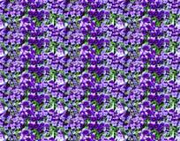紫罗兰开花无缝的样式照片背景 免版税库存图片