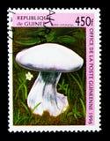 紫罗兰色丝膜菌属蘑菇,蘑菇serie,大约1996年 库存图片