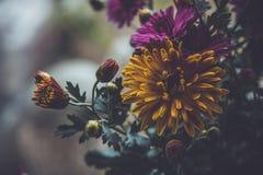 紫罗兰色和黄色花 免版税库存照片