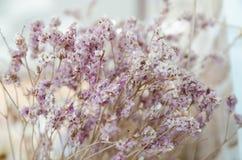 紫罗兰色和黄色statice花 图库摄影