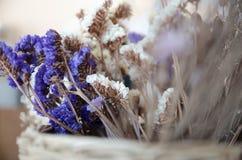 紫罗兰色和黄色statice花 库存图片