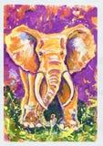 紫罗兰色大象 免版税库存照片
