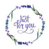 紫罗兰色淡紫色 花卉植物的花 框架边界装饰品正方形 图库摄影