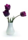 紫罗兰色的郁金香 免版税图库摄影