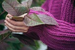 紫罗兰色编织羊毛衫,细节 免版税库存照片