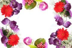 紫罗兰色背景的郁金香 免版税图库摄影