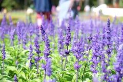 紫罗兰色花有被弄脏的背景 库存图片