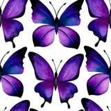 紫罗兰色蝴蝶无缝的背景  免版税库存图片