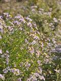 紫罗兰色野花草原 库存照片