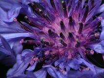 紫罗兰色野花 库存照片