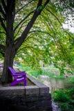 紫罗兰色长凳垂直的看法在一条小河附近的在澳大利亚的乔治城 免版税库存图片
