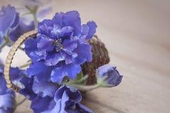 紫罗兰花束 非洲非洲堇紫罗兰 库存照片
