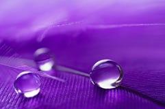 紫色与三个宏指令水露滴,美好的自然本底的颜色蓬松羽毛的一个抽象图象 库存图片