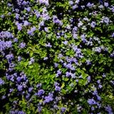 紫色世界 免版税库存照片