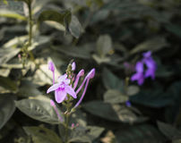 紫色兰花在庭院里,紫色花,紫罗兰色花,在狂放的自然的紫色花 库存照片