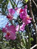 紫色兰花是非常美丽的 免版税库存照片