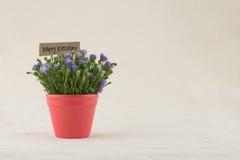 紫色切削刀开花在红色罐的花束 库存照片