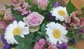 紫色口气花花束 库存图片