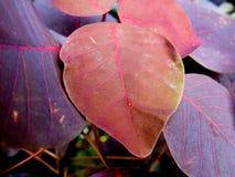 紫色和布朗叶子背景 库存图片