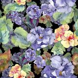 紫色和橙色gardania花 花卉植物的花 无缝的背景模式 免版税库存照片