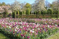 紫色和白色美丽的郁金香花床在绿色公园 春天在库肯霍夫花园,Netherlans里 免版税库存照片