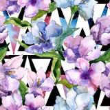 紫色和蓝色德国锥脚形酒杯花 花卉植物的花 无缝的背景模式 免版税库存图片
