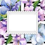 紫色和蓝色德国锥脚形酒杯花 花卉植物的花 框架边界装饰品正方形 图库摄影